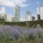 Chicago skyline from Lurie Garden